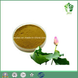 Estratto naturale del foglio del loto di vendita calda/estratto di Nucifera