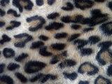 Impressão Leopard (HZS veludo--0088)