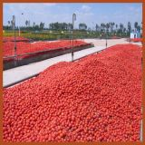 mit 30 Years Experience Jd Tomato Paste Machine