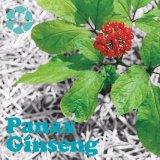 Panax Ginseng Extract / Ginsenosides (faible résidu de pesticide)