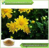 Извлеките Chrysanthemum, порошок 10: 1