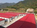 판매를 위한 새로운 Prefabricated 강철 구조물 창고 작업장 건물
