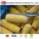 Secciones del maíz dulce de Fozen con de calidad superior