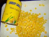 400g en conserve le maïs doux en haute qualité