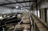 La nouvelle conception de la Chambre de la vache /ferme de la vache/vache hangar avec cages de la couche de poulet de type H