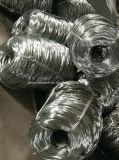 Rete metallica esagonale galvanizzata del pollo/coniglio/pollame