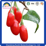 Lycium Barbarum L. Goji Berry Extract 10-50% Polissacarídeos