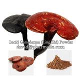 100% 자연적인 음식 급료 분말 Ganoderma (Ling Zhi)