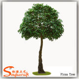 2015 Factory Wholesale Artificial Mini Ficus Banyan Trees