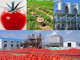 Hb 30%-32% Brix de la concentración de la goma de tomate de Xinjiang en certificados kosher del tambor 220L HACCP Halal