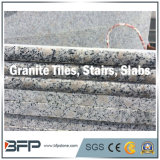 Mármol de G603/654/G664/Rusty/losa naturales blancos amarillos negros grises del granito