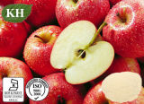 100% 자연적인 Apple 펙틴 분말: Galacturonic 산 65% 10:1