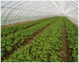 Red del áfido del insecto del invernadero del HDPE de la alta calidad del fabricante de China