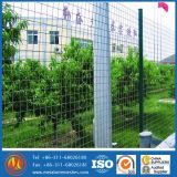 Recouvert de plastique de haute qualité Holland /Dutch Wire Mesh /Euro Clôture