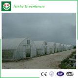 Agricultura Farm Multi-Span película plástica de gases com efeito de produtos hortícolas