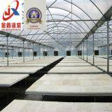 Effet de serre en verre intelligente pour l'agriculture moderne la plantation