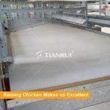 Modèle de cage de poulet de batterie de Chambre de ferme avicole
