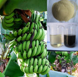 Het organische Calcium van de Meststof van de Landbouw en de Speciale Meststof van het Borium voor de BladMeststof van de Banaan