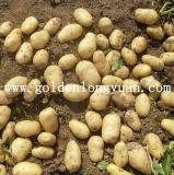 良質の新しいポテト(250gは活動化し、)