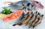 Ghiaccio del filetto di pesce che lustra Machine