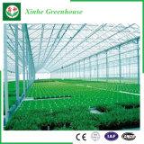 Landbouw/de Commerciële Groene Huizen van de Tuin van het PC- Blad voor Bloemen