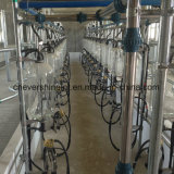32 lugares Salão de leite tipo túnel ósseo de peixe em aço inoxidável
