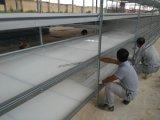 Maison de la volaille à griller préfabriqués Xgz/ferme hangar de la volaille (GR-009)