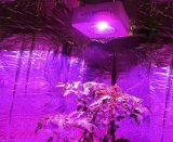 가득 차있는 스펙트럼 E27 15W LED는 플랜트를 위한 가벼운 램프를 증가한다