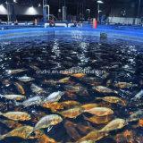 Proveedor Zlrc Fibra de vidrio, plástico reforzado con fibra de plástico de alta calidad Fish Tank
