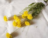 10のヘッド野生の黄色い人工花