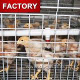 Cage de poulet de poulette de couveuse de batterie de qualité