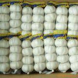 Aglio cinese bianco puro del nuovo raccolto dell'esportazione