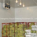 Pièce modulaire d'entreposage au froid depuis 1982 pour des fruits et légumes