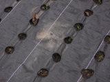 Сплетенные ткани земной крышки для управления Weed