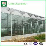 Invernadero hueco del policarbonato del jardín y sólido de cristal de la hoja