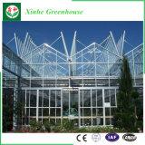 Heißer Verkaufs-Gemüsegarten blüht Glasgewächshaus
