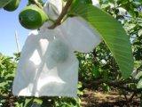 Cubierta vegetal polipropileno no tejidos de la fruta