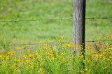 Galvanizado Hot-Dipped valla de alambre de púas