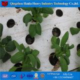 Traforo agricolo Greehouse del film di materia plastica di Multispan per il pomodoro