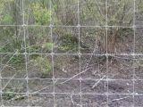 Cerca arquivada do engranzamento de fio dos carneiros da cerca da venda gado quente