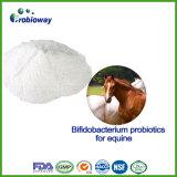 Nutrition personnalisée Probiotics de cheval d'OEM pour la santé immunisée d'intestin