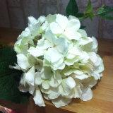 Fiore artificiale del Hydrangea di seta reale di tocco in vari colori per la decorazione &Wedding domestica