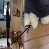 Une meilleure mousse de jet de mousse de polyuréthane s'est appliquée dans la conservation de la chaleur de la chambre