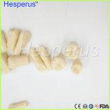 Il modello di ricambio dentale dei denti per sostituisce la pratica Nissin dell'allievo dei denti con la vite Hesperus