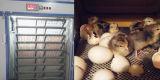 Una piccola incubatrice automatica delle 528 uova del pollame di vendita calda per coltivare
