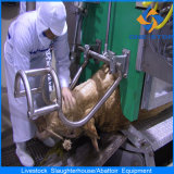 Mucca Slaughterhouse Equipment con l'iso Certificate