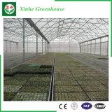 Invernadero comercial de la película plástica de la agricultura