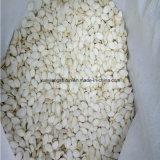 新しい穀物の雪の白いカボチャシードの最下の価格