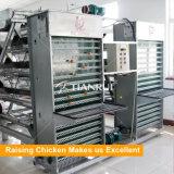 養鶏場の機械を集める自動層の鶏の卵