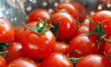 La maggior parte della capsula potente dell'estratto del lycopene dell'ingrediente degli antiossidanti